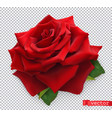 red rose 3d realistic object vector image vector image