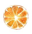 Slice of orange isolated on white background vector image