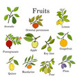 big set of colorful fruit icons apple pear plum vector image