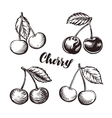 Cherry sketch Fruits vector image
