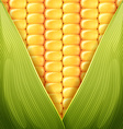corn pattern vector image vector image