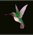 hummingbirds isolated trendy print vector image