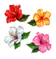 realistic hibiscus flower leaves set vector image