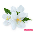 spring flowers 3d realistic icon vector image vector image
