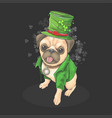 st patricks day pug wears a cute hat vector image vector image
