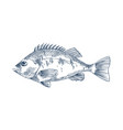 bass seafood monochrome vector image vector image