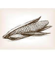 Ear of corn sketch style vector image