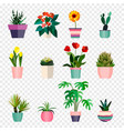 set green house plants in pots outdoor and vector image