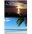 two blurred tropical backgrounds vector image vector image