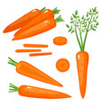 bright set of fresh carrots isolated on vector image