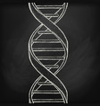 dna helix symbol on chalk board background vector image vector image
