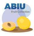 pouteria caimito or the abiu golden fruit isolated vector image vector image