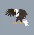 north american bald eagle symbol of freedom and vector image