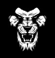 angry lion face vector image
