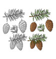 pine cone and branch fir tree vintage vector image