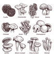 sketch mushrooms hand drawn various mushroom vector image vector image