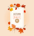 autumn sale promo banner with fall foliage on pink vector image vector image