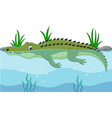 cartoon green crocodile swimming in river vector image vector image