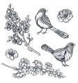 collection hand drawn sakura flowers vector image vector image