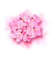 decorative sakura flowers bouquet design vector image vector image