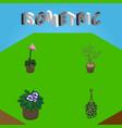 isometric flower set of flowerpot grower blossom vector image vector image
