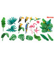 tropical plants and flowers exotic birds toucan vector image
