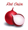 vegetable red onion white background image vector image vector image