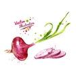 Red onion vector image