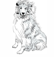Sweet dog rough Collie breed hand drawing vector image vector image