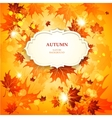 Bright autumn background with maple leaves vector image vector image