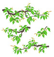 tree branches set flat vector image