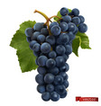 wine grapes fresh fruit 3d realistic vector image
