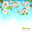 Beautiful Cherry Blossom vector image vector image