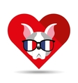 cute dog pet with flag france glasses heart vector image