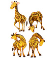 Giraffe in four different poses vector image