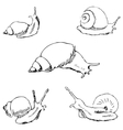 Snails Pencil sketch by hand vector image vector image