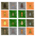 assembly flat shading style bug scarab araneus vector image vector image