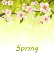 Cute Branches of Cherry Blossom Tree Natural vector image vector image