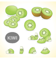 Set of kiwi fruit in various styles vector image vector image