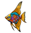 angle fish entangle with mix colour vector image vector image