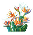 floral bouquet with strelitzia flowers vector image