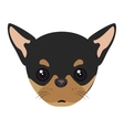 pinscher dog cartoon vector image vector image