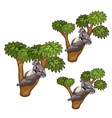 funny koala bears sleeps on trees animals vector image vector image