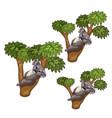 funny koala bears sleeps on trees animals vector image