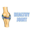 healthy joint vector image vector image