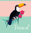 image of bright tropical toucan and palm branch vector image