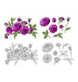 set of purple dahlia bouquet and floral elements vector image