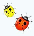 vector ladybird vector image