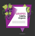banner grapes organic vector image