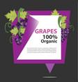 banner grapes organic vector image vector image